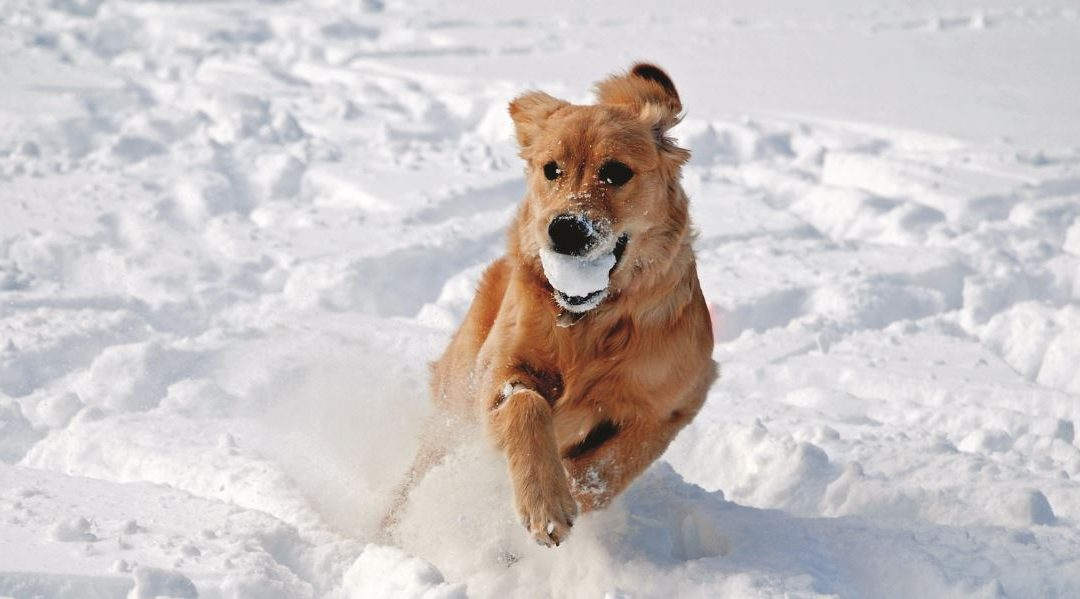 Pets, Colder Weather and the Law