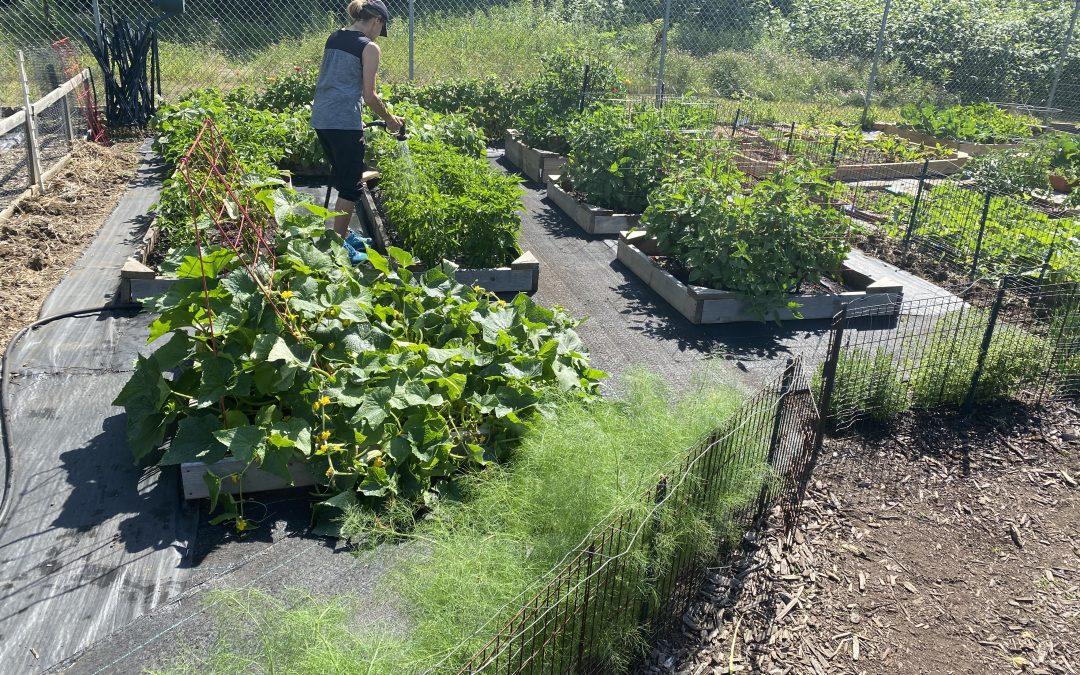 Beaver's Community Garden
